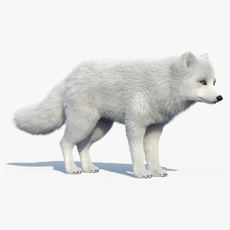 3d arctic fox fur model