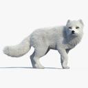 Arctic Fox 3D models