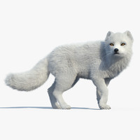 arctic fox fur rigged 3d max