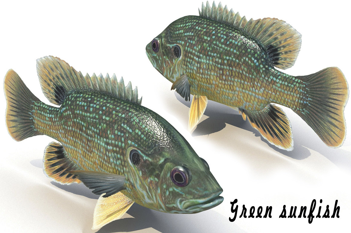 fish green sunfish 3d model