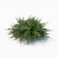 sabina landscaping 3ds