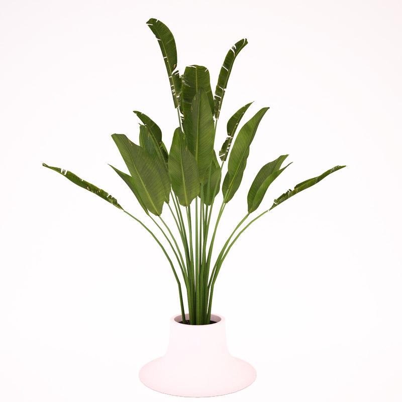 3d max banana palm