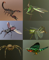 Insect Collection 1
