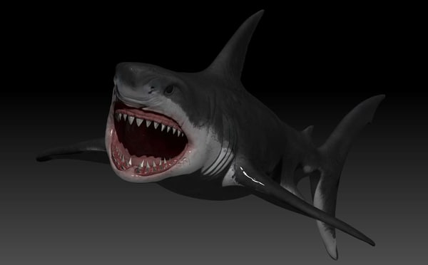 3d 3ds white shark