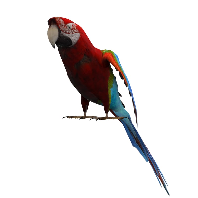 3d model parrot animations