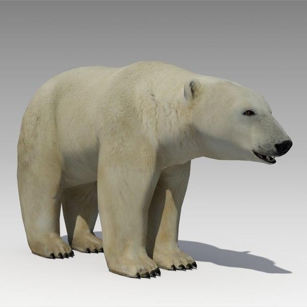 polar bear animations max
