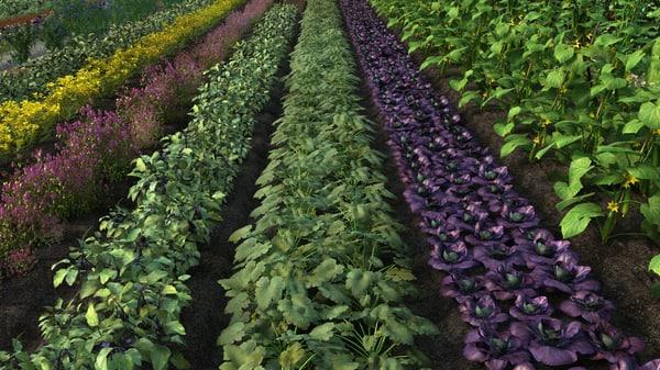 3d model vegetable field