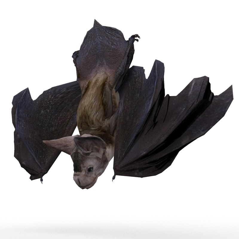 3d max vampire bat animations