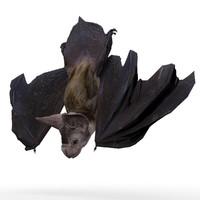 Vampire Bat Animated