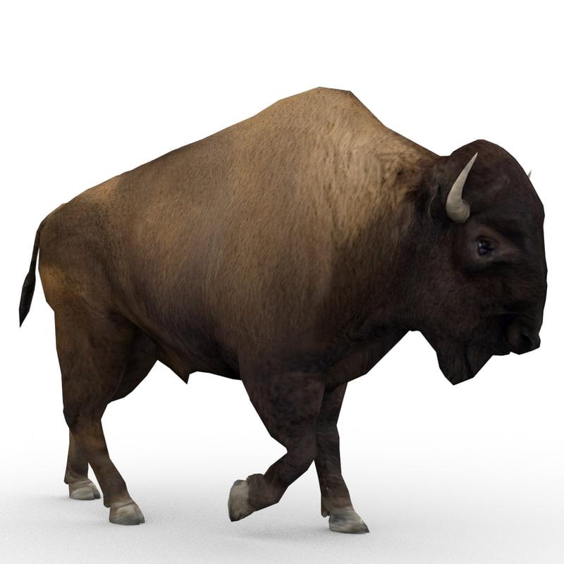 american buffalo animations 3d max