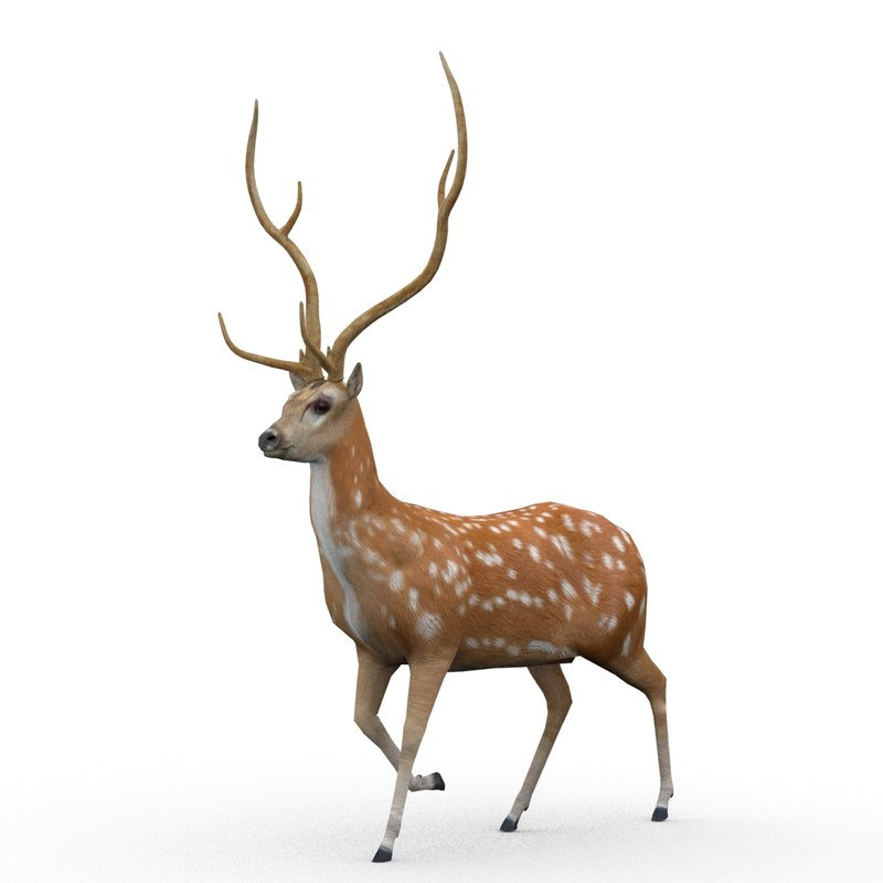 deer animations 3d max