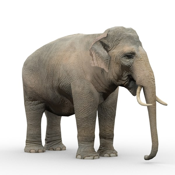 elephant animations 3d model