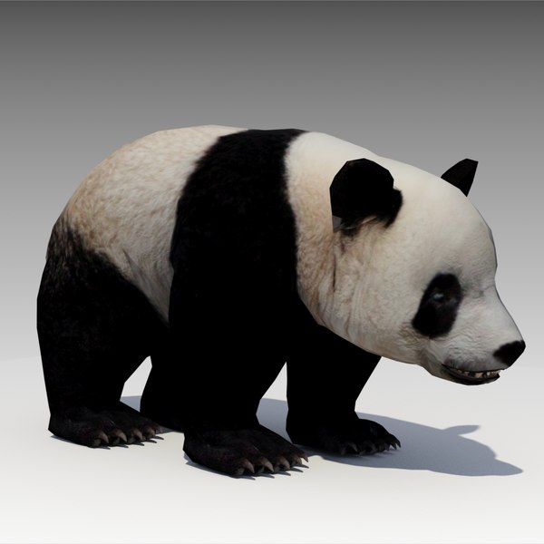 3d model giant panda animations