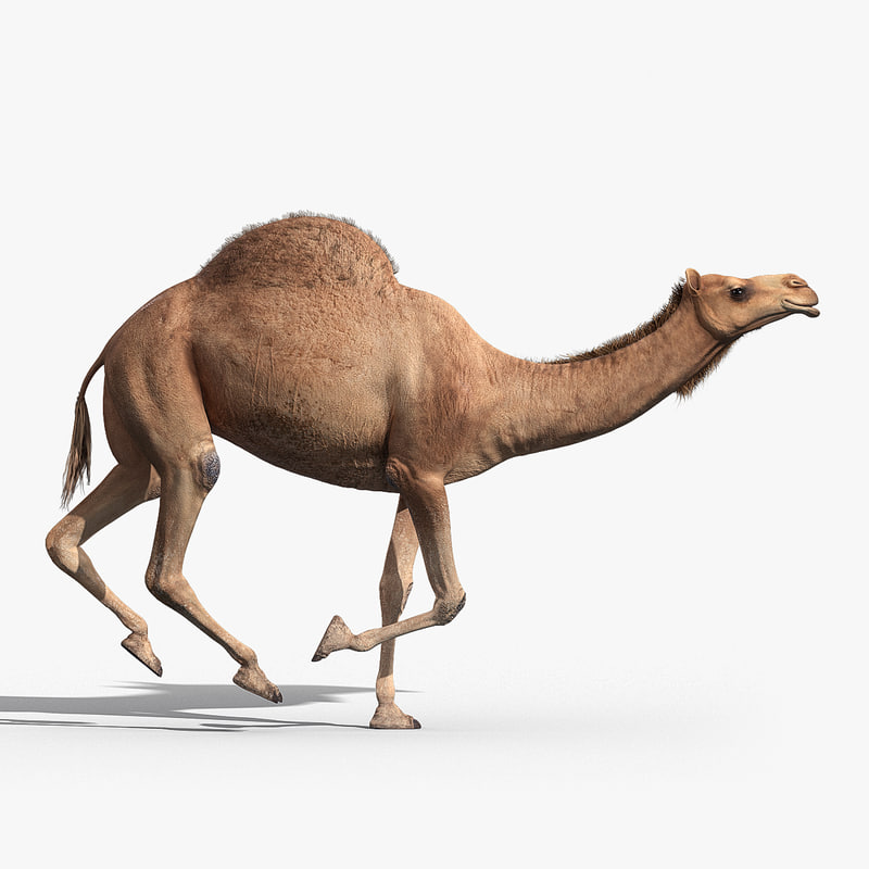 camel animation 3d max