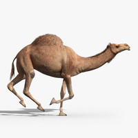 Camel(ANIMATED)