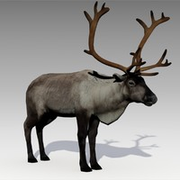 reindeer animations 3d max