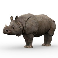 asian rhinoceros animations rhino 3d max