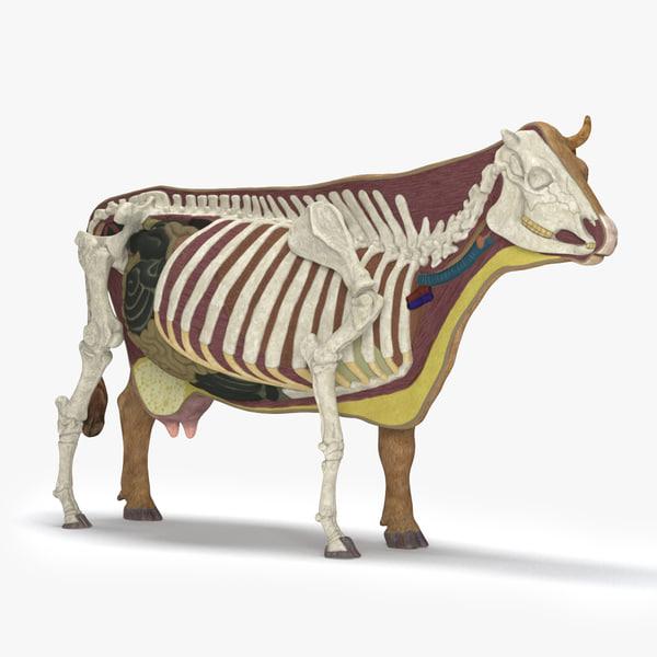 3d model of cow anatomy