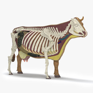 3d model of cow anatomy