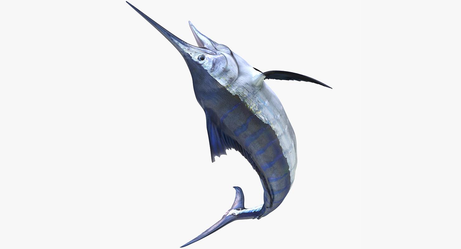 blue marlin rigged 3d max