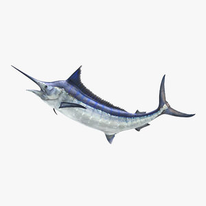 blue marlin pose 2 max