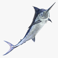 3d blue marlin pose 3