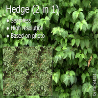 Hedge (2 in 1)