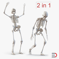 3d model human skeletons rigged