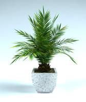 3d phoenix palm pot