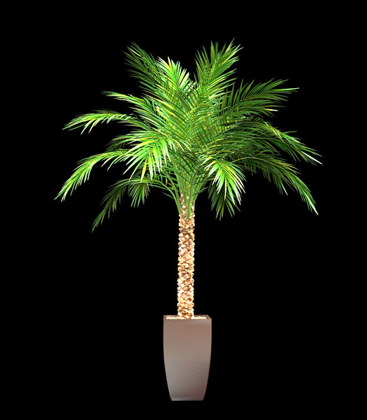3d palm pot