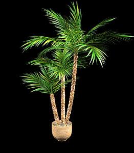 3d qualitative palm pot model