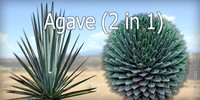 Agave (2 in 1)