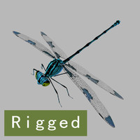 Dragonfly_Rigged