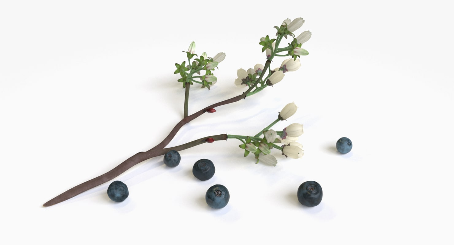 max blueberries flowering branch