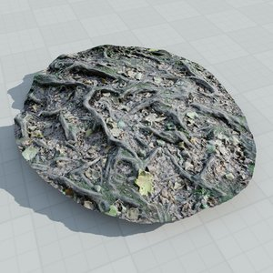 3d model scan tree roots