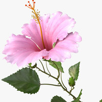 3d model hibiscus pink