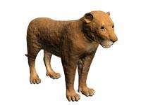 lioness 3d max