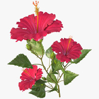 3d model hibiscus red branch