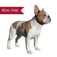 3d model realistic french bulldog real-time