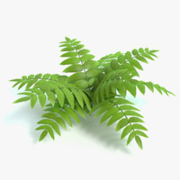 3d cartoon fern model