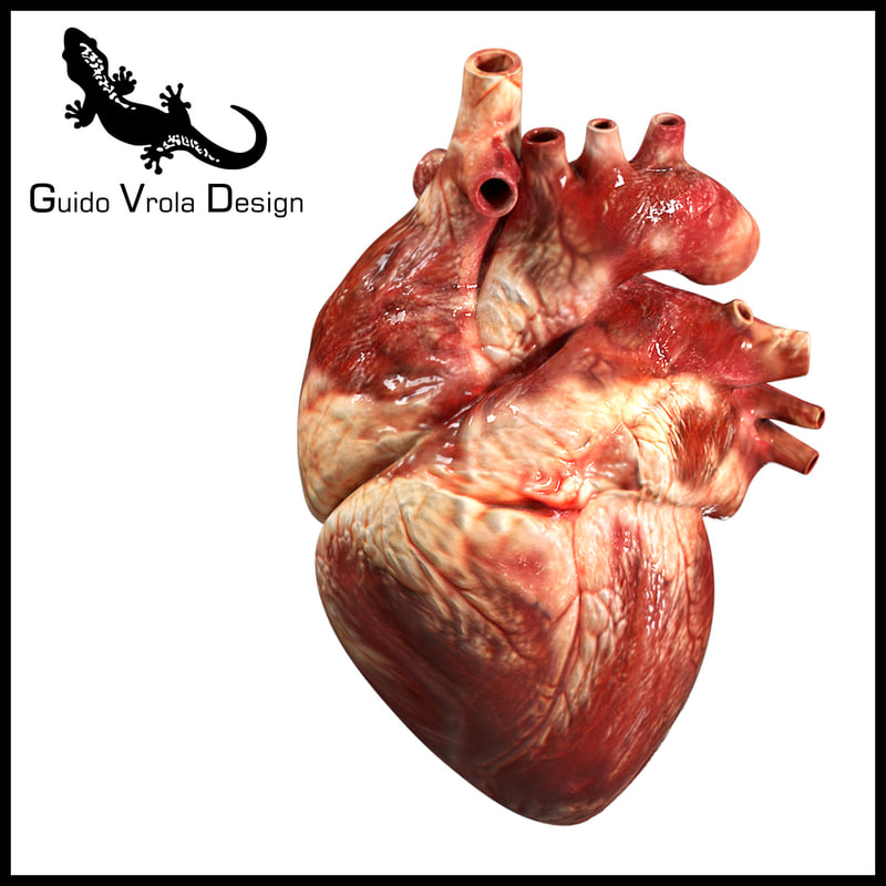 heart human accurate 3d model