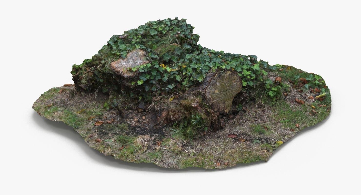 3d tree stump scan