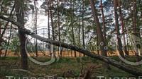 Westruper Heatherland forest