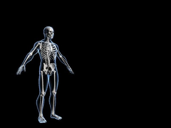 human skeleton obj