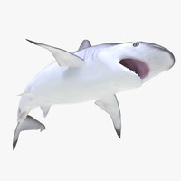 spottail shark pose 2 max