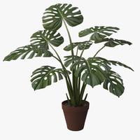 3d monstera plant v4