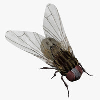 house fly obj