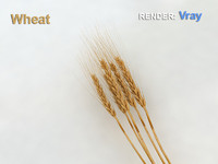 3d wheat food crops model