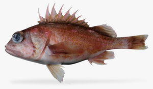 greenblotched rockfish 3d model