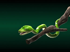 green tree emerald boa 3d model